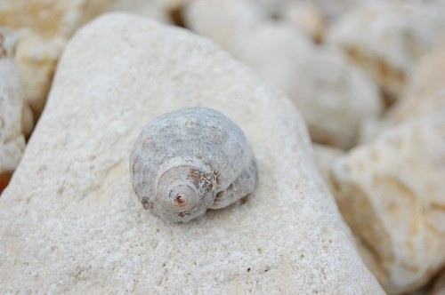 Free photos: coquille d'escargot de mer