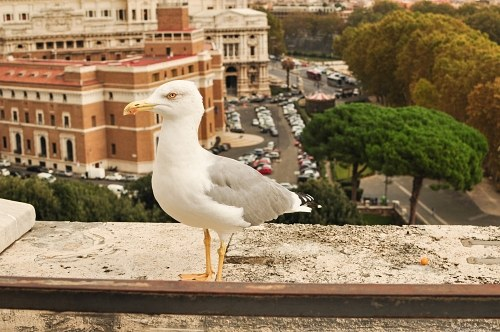 Seagull on rooftop