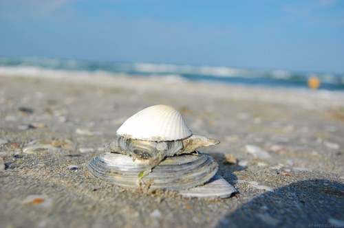 Free photos: Shell-Stack