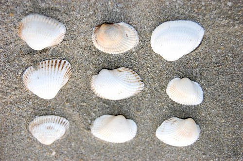 Free photos: Conchiglie allineati su una spiaggia