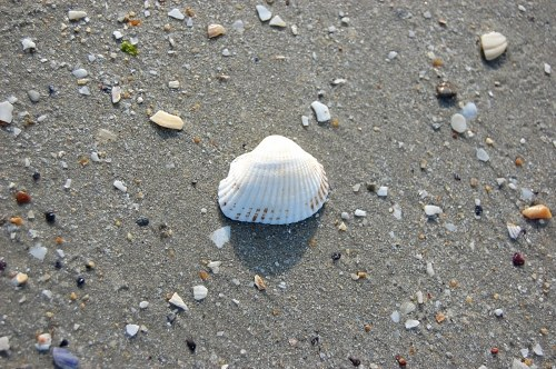 Free photos: Single-Shell auf Sand