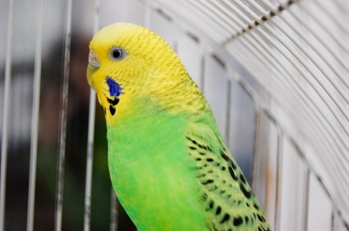 Free photos: Small caged parrot