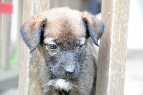 Free photos: Small sad puppy