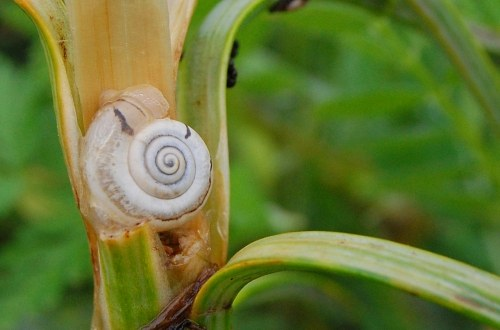 Snail shell on a plant