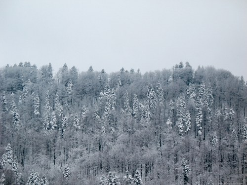 Free photos: Snow covered mountain forest