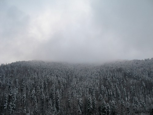 Snow forest in clouds