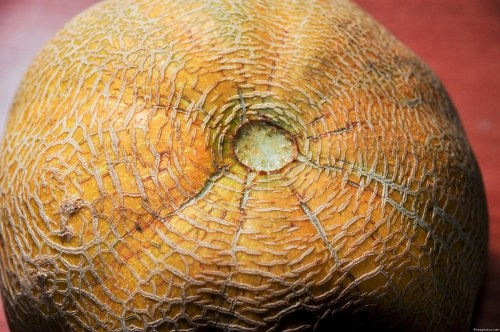 Free photos: Summer cantaloupe