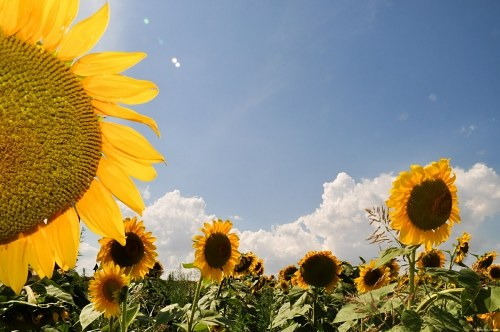 Free photos: Sun and flowers