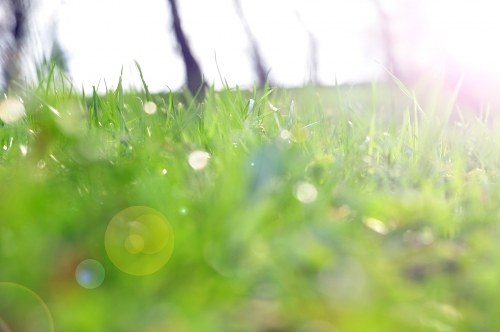Sunshine over grass