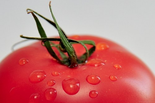 Free photos: Tomaten Makro