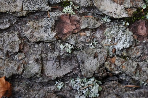 Free photos: Tree bark exterior pattern