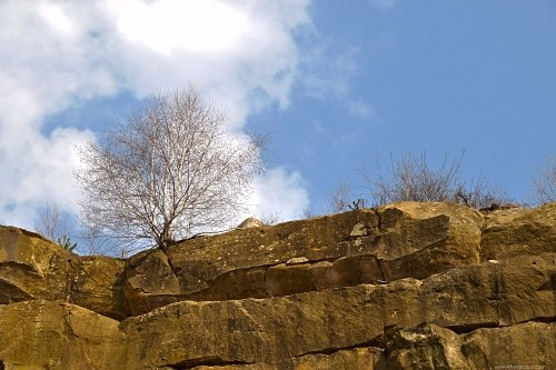 Free photos: Tree on the rocks