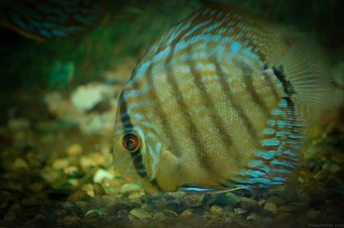 Free photos: Tropical fish in aquarium