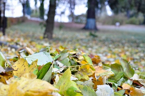 Yellow autumn leafs on the ground
