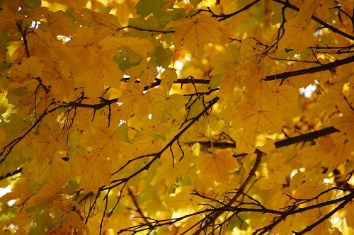 Free photos: Yellow environment