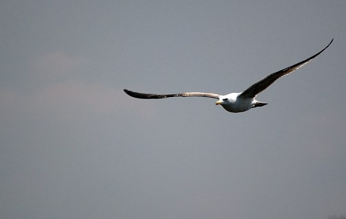 Free photos: Bird glisse dans l'air