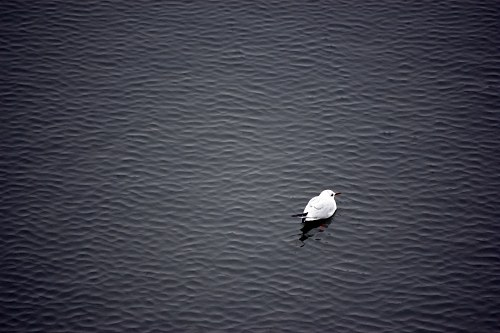 Bird on water