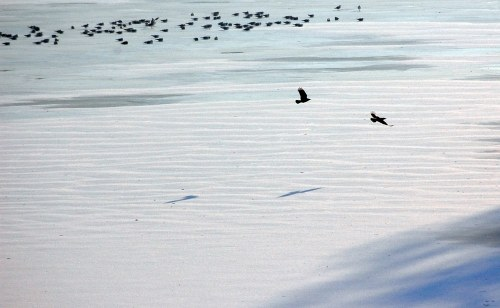 Birds on frozen lake