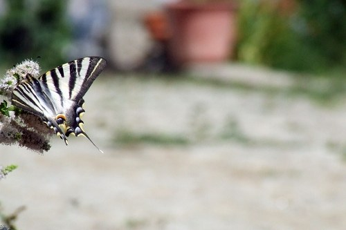 Free photos: Butterfly on plant