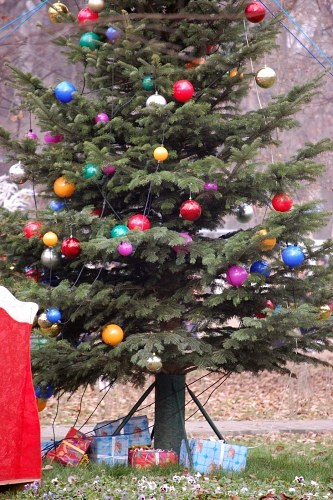 Free photos: Christmas pine tree with baubles and presents