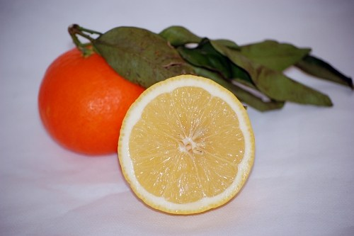 Cut in half lemon and mandarine