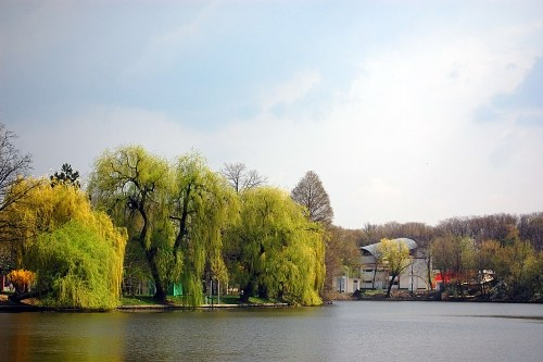 Free photos: Lakeside alberi ed edifici