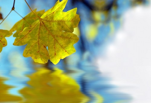 Leaf reflection in water