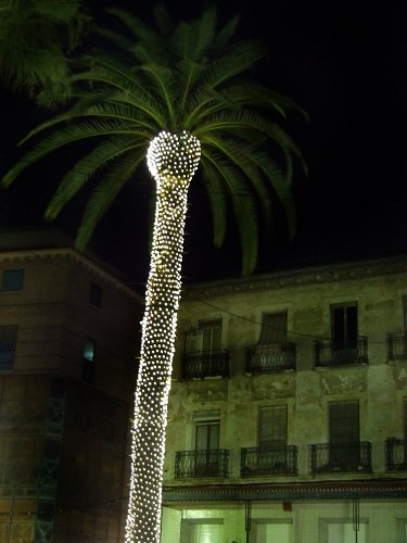 Palm tree decorated with lights