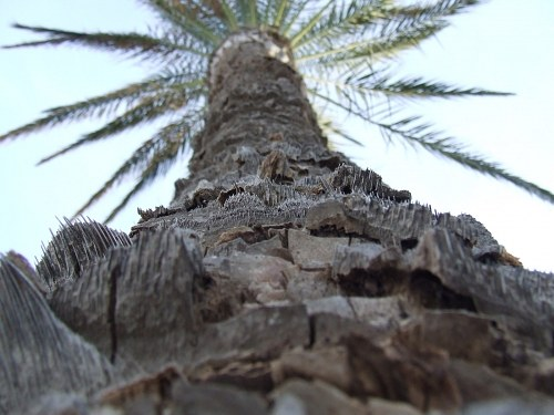 Palm tree trunk