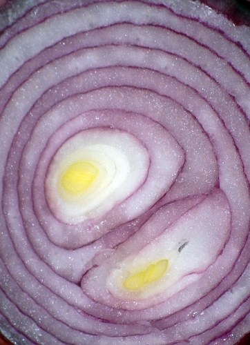 Red onion slice free photo