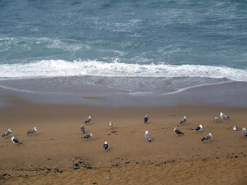 Free photos: Seagulls on beach