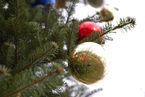 Shinny globe in a Christmas tree