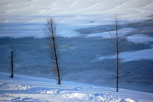 Trees near frozen lake