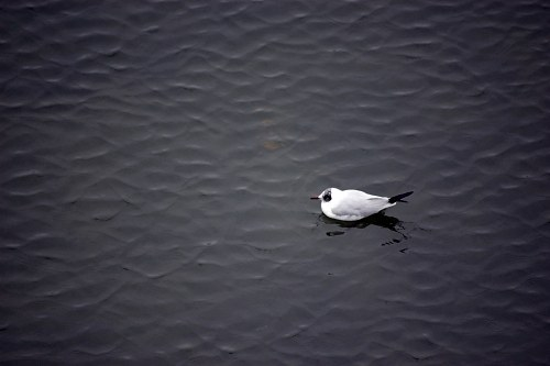 Free photos: White bird on lake