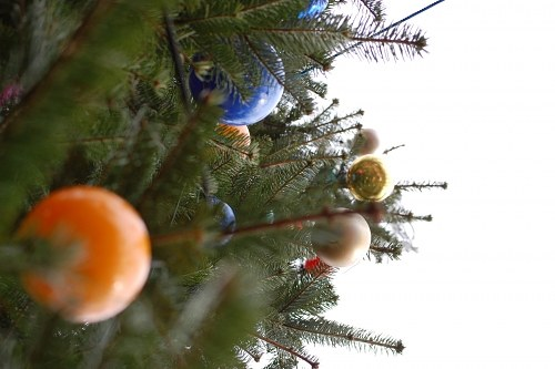 Free photos: Xmas tree from below